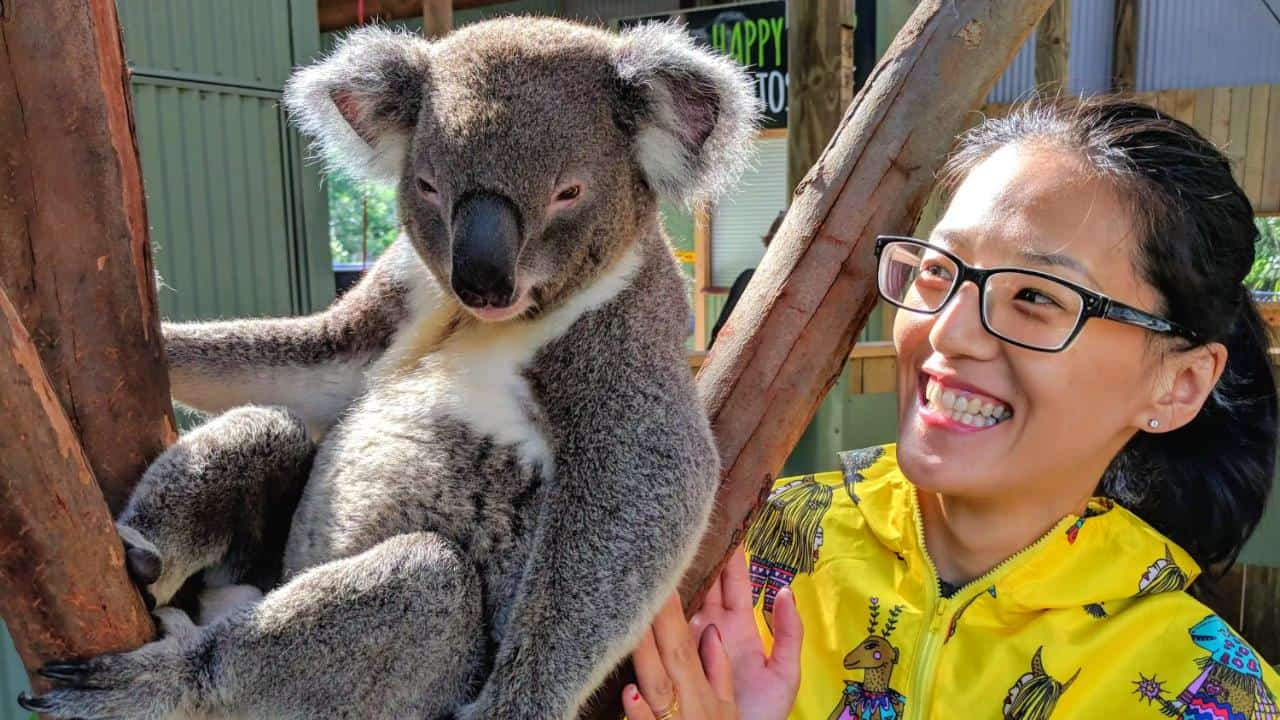 Pet a koala - Wildlife, Waterfalls & Wine one day tour from Sydney